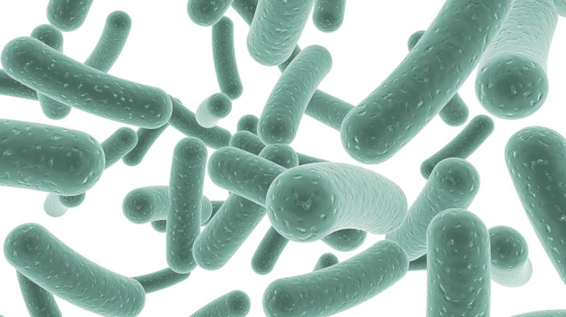 10 неща които не знаете за пробиотиците а трябва