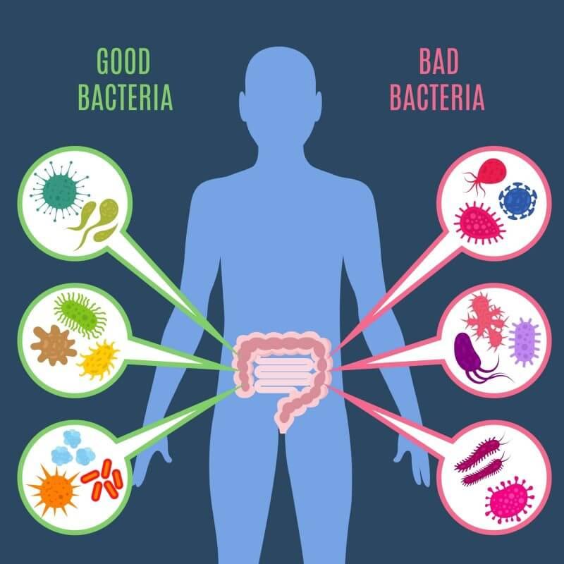 Добрите бактерии и лошите бактерии. Схемата показва, че и двата вида съществуват в човешкия организъм.