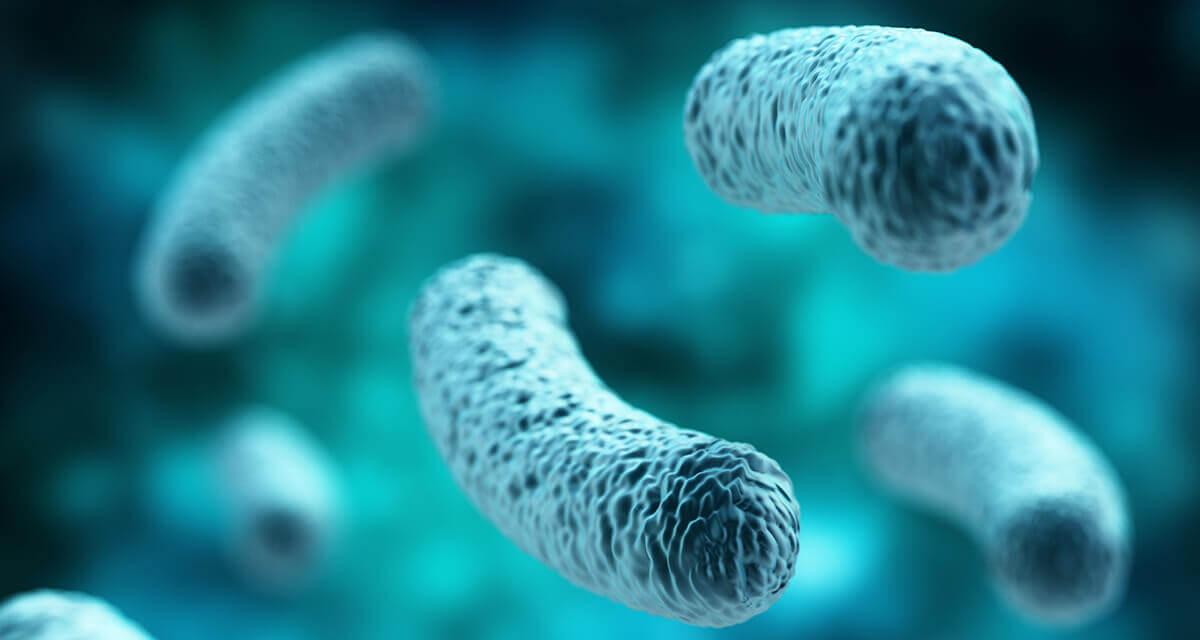 Пробиотична бактерия - колонии от такива бактерии са разположени по стените на стомашно-чревния тракт.