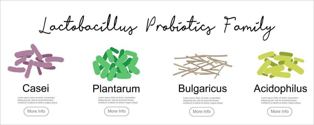 Пробиотик - добрите батерии в стомаха. Показани са пробиотици от фамилия Lactobacillus.